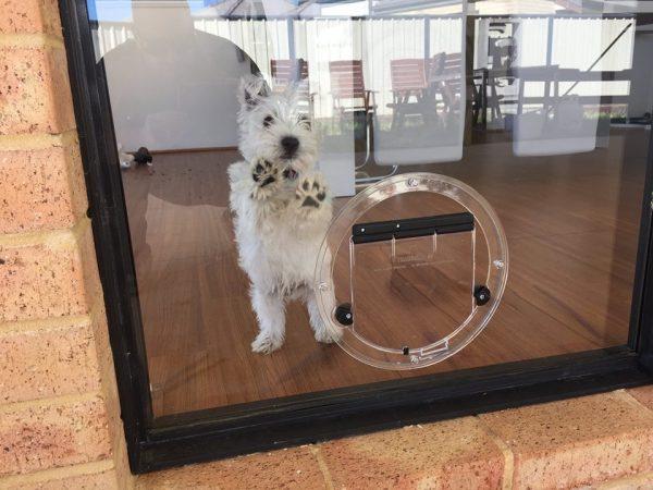 small round dog door